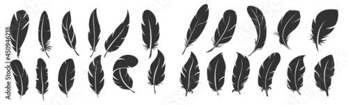 Fotografia Vector, silhouette of bird feather, collection