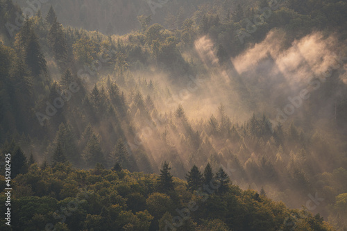 Canvas Print After a summer thunderstorm, the sun shines through the rising haze in the Black