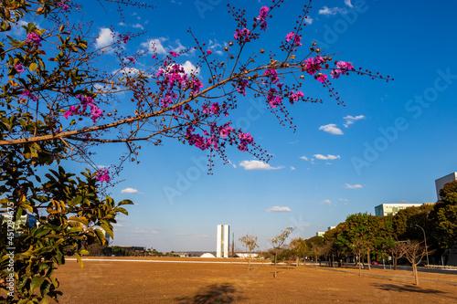 Fotografia Flores na Esplanada dos Ministérios em Brasília.
