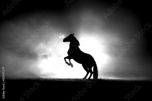 Fototapeta Rearing horse black and white in fine art and with back lighting