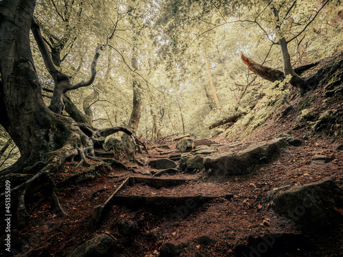 Canvas Print Mystical forest pathways and moss covered trees