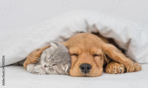 Foto Young English Cocker spaniel puppy hugs kitten