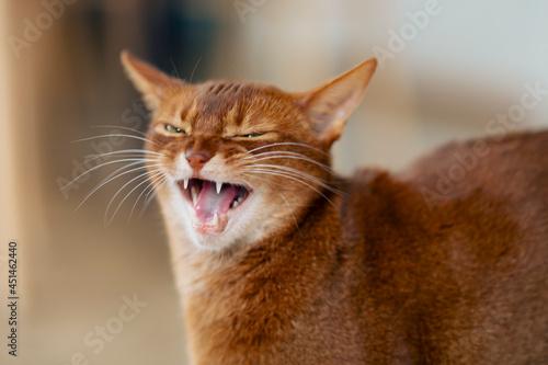 Fototapeta happy cat
