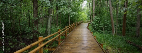 Fotografia Modern wooden winding pathway (boardwalk) through green deciduous trees in public park (forest)