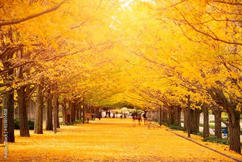 Tela Tokyo, Japan Autumn Park