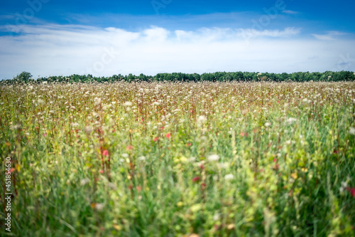 letni krajobraz, łąka, horyzont, niebo