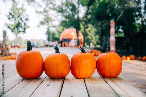 Fotografia, Obraz A row of fall orange pumpkins sitting on top of wood planks at a fall festival a