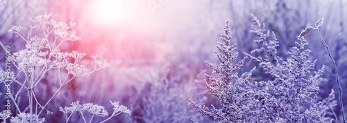 Fotografija Winter morning in the forest during sunrise