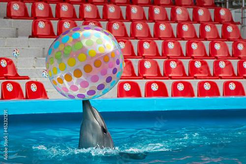 Dolphin playing with colorful ball in dolphinarium with empty sits