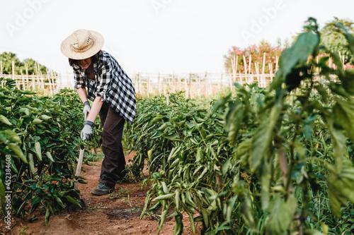 Cuadros en Lienzo Young farmer woman working at urban green garden while tilling the fertile soil
