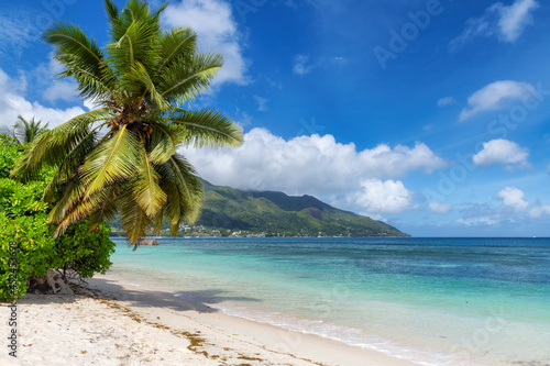 Paradise tropical beach. Sandy beach with palm and turquoise sea. Summer vacation and tropical beach concept.