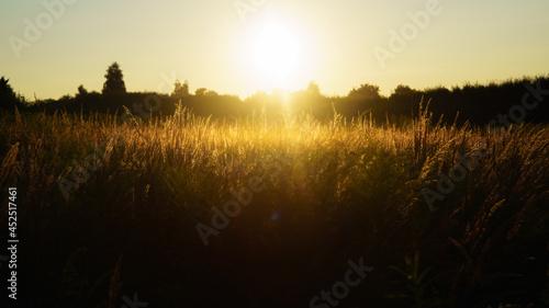 zachód nad łąką