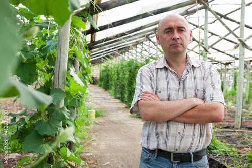 Fotografie, Obraz Male horticulturist standing near cucumber seedlings in hothouse