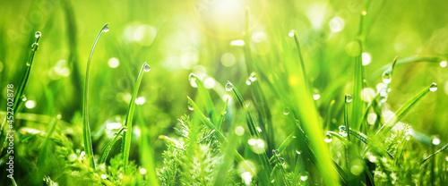 Fotografia green grass background