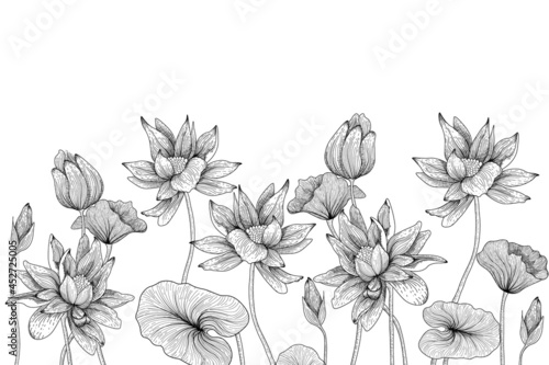 Fotografia Vector linear graphic illustration of black and white water lilies flowers and l