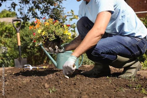 Obraz na plátně Man planting flowers outdoors on sunny day, closeup