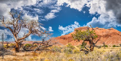 Fototapeta Arches National Park