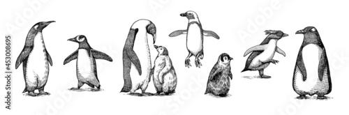 Fotografija Emperor penguin colony