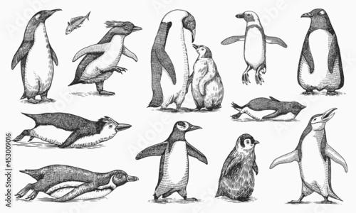 Fotografija Emperor penguin and cute baby