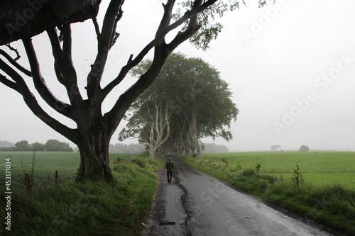 Fotografering The Dark Hedges, Irlanda. Precioso camino de hayas y setos.