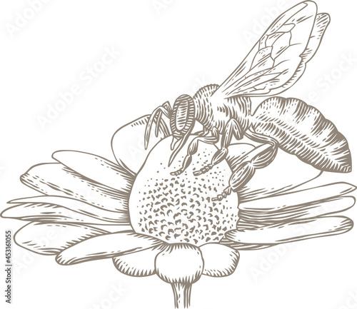 Vászonkép Bee on a daisy flower
