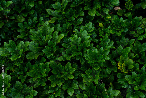 Close up shot of fresh green leaves Fototapet