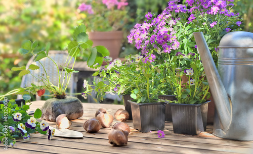 flowers pots and strawberry plant on a garden table in home terrace #453240047