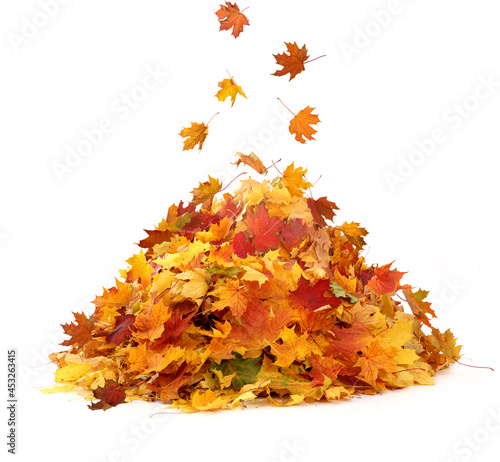 Fotografie, Obraz Pile of autumn maple colored leaves isolated on white background.