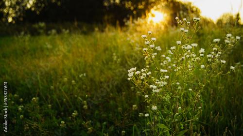 kwiaty w zachodzącym słońcu