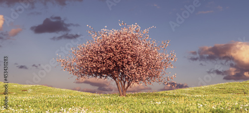Foto Pink Blossom Tree on a Grass Hill Sunset Sky Spring Flower Meadow Ornamental Jap