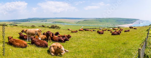 Photo A panorama view of cows grazing at Seaford, UK with a backdrop of Cuckmere Haven