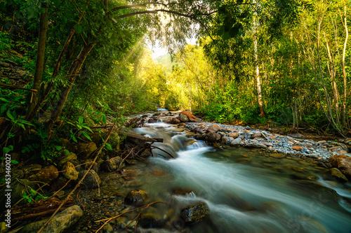 Canvas wild creek