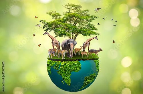 Fototapeta Concept Nature reserve conserve Wildlife reserve tiger Deer Global warming Food