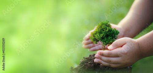 Fototapeta CSR concept and business planting saplings of trees.