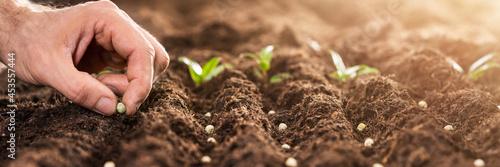 Photo Farmer's Hand Planting Seeds In Soil