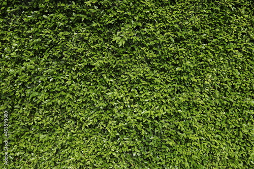 Plant wall as a background for graphic usage. Fotobehang