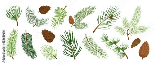 Fotografia Christmas pine branch and cone, evergreen tree, fir, cedar twig vector icon, winter plants, New Year wood, holiday decoration