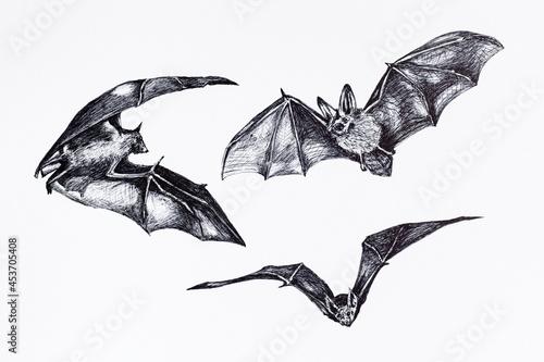 Fotografie, Obraz Collection sketch of bats