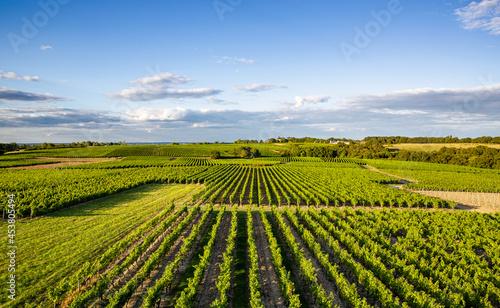 Photo Paysage de vignoble en France