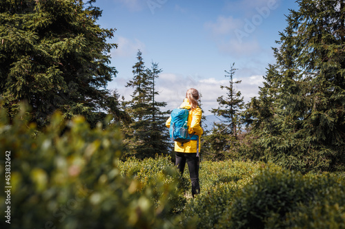 Fotografiet Hiker with a backpack standing in a spruce forest with blueberry bushes