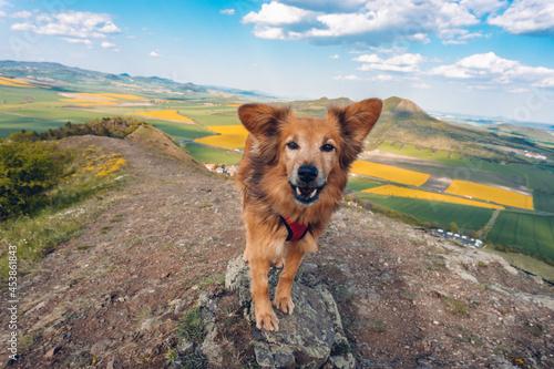 Obraz na plátně Dog on the trip to hill