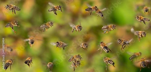 Valokuvatapetti unique photo of bees in flight - bee breeding (Apis mellifera) close up