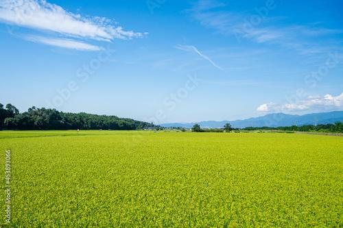 Obraz na plátne 塩尻市 広丘の田園から松本市方面