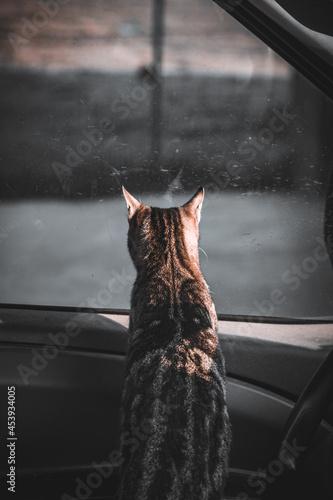 Fotografie, Obraz cat in the windown