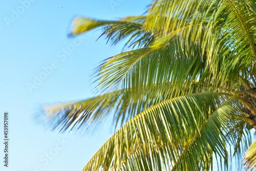 Fotografiet Hojas de palmera en movimiento con cielo azul