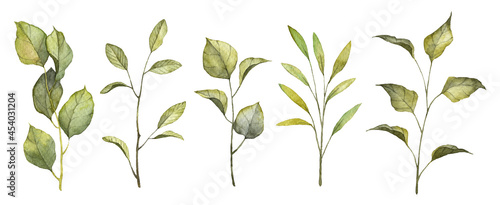 Set of watercolor hand painted realistic green leaves on twigs. Botany branches with leaves isolated on white backgrounds. Objects for patterns, backgrounds, design cards, templates