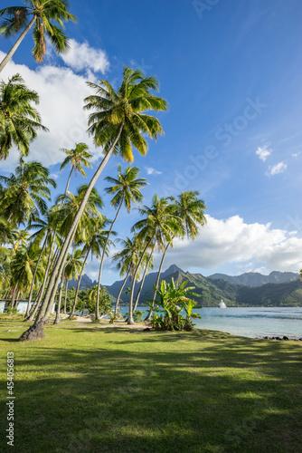 Obraz na plátně Palm trees at the beach, Moorea, French Polynesia
