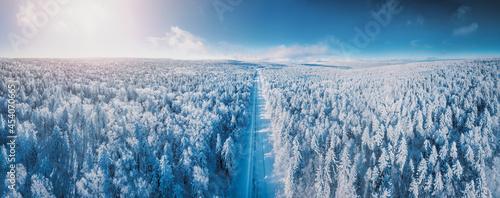 Fotografie, Obraz Fir trees covered in snow