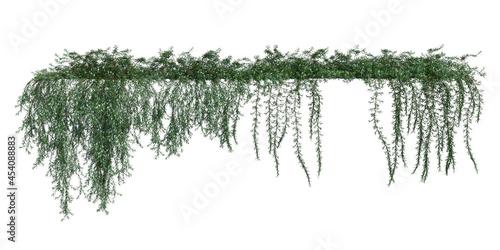 Fototapeta Climbing plants creepers isolated on white background 3d illustration