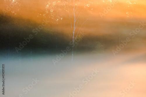 Drzewo Mgieł